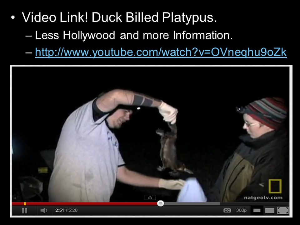 Video Link. Duck Billed Platypus. –Less Hollywood and more Information.