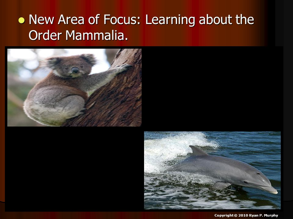 New Area of Focus: Learning about the Order Mammalia.
