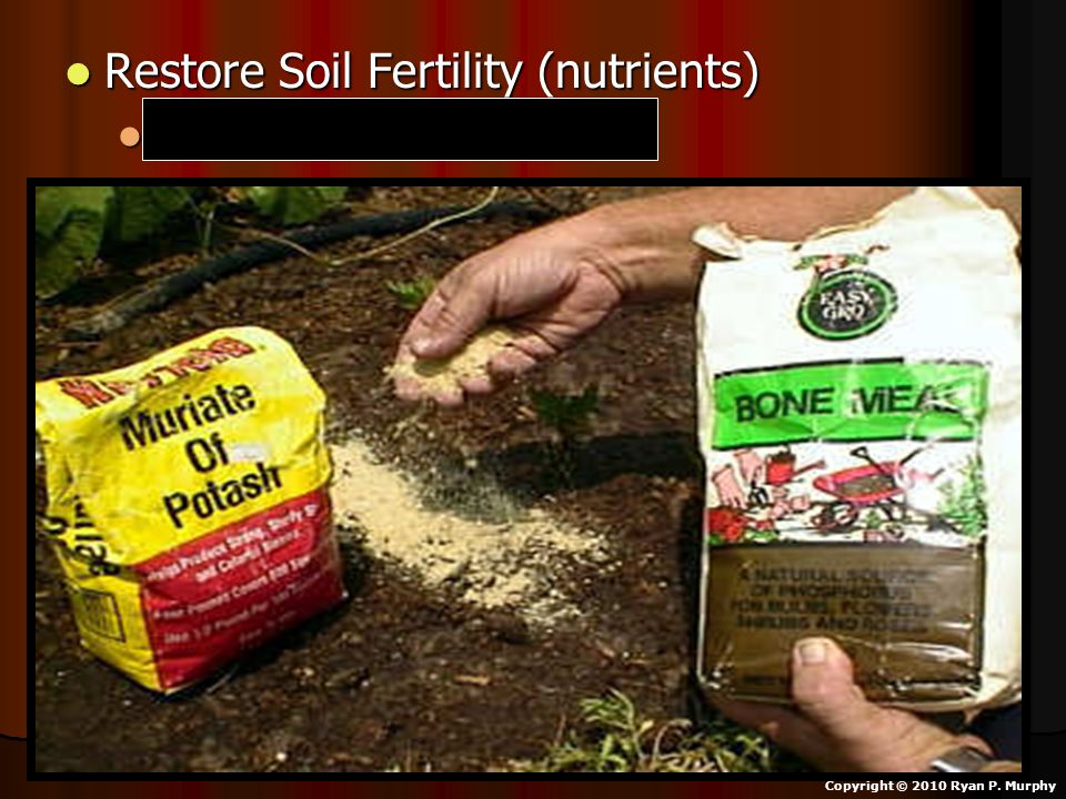 Restore Soil Fertility (nutrients) Restore Soil Fertility (nutrients) Nitrogen and Phosphorus Nitrogen and Phosphorus Copyright © 2010 Ryan P.