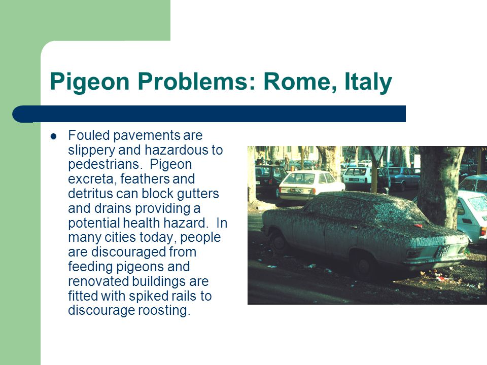 Pigeon Problems: Rome, Italy Fouled pavements are slippery and hazardous to pedestrians.