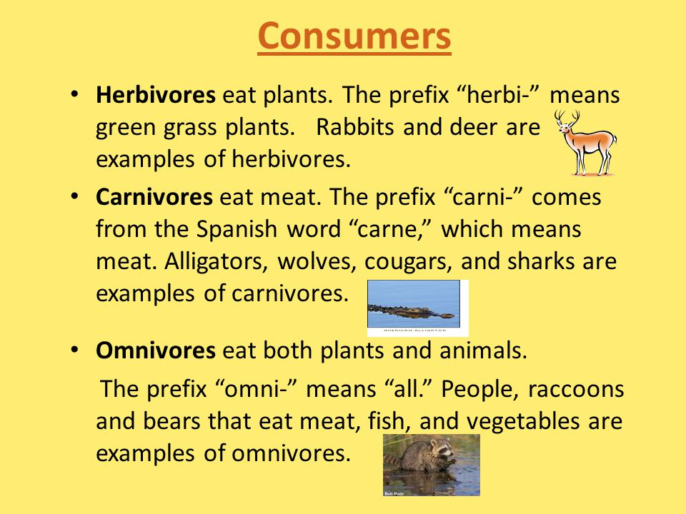 Consumers Herbivores eat plants.The prefix herbi- means green grass plants.