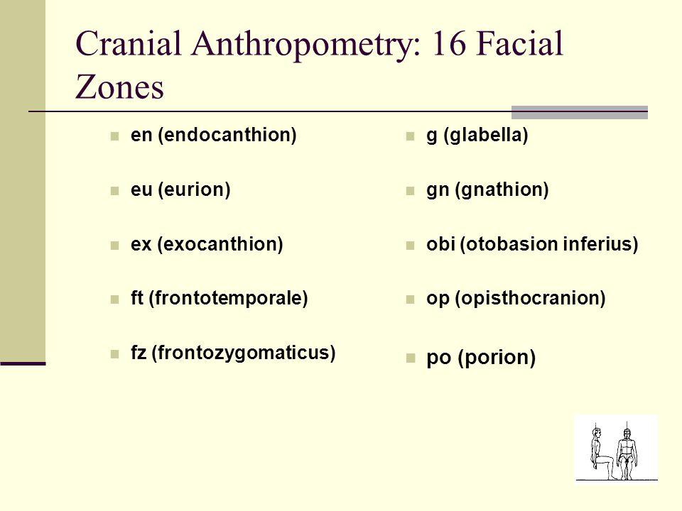 Cranial Anthropometry: 16 Facial Zones en (endocanthion) eu (eurion) ex (exocanthion) ft (frontotemporale) fz (frontozygomaticus) g (glabella) gn (gnathion) obi (otobasion inferius) op (opisthocranion) po (porion)