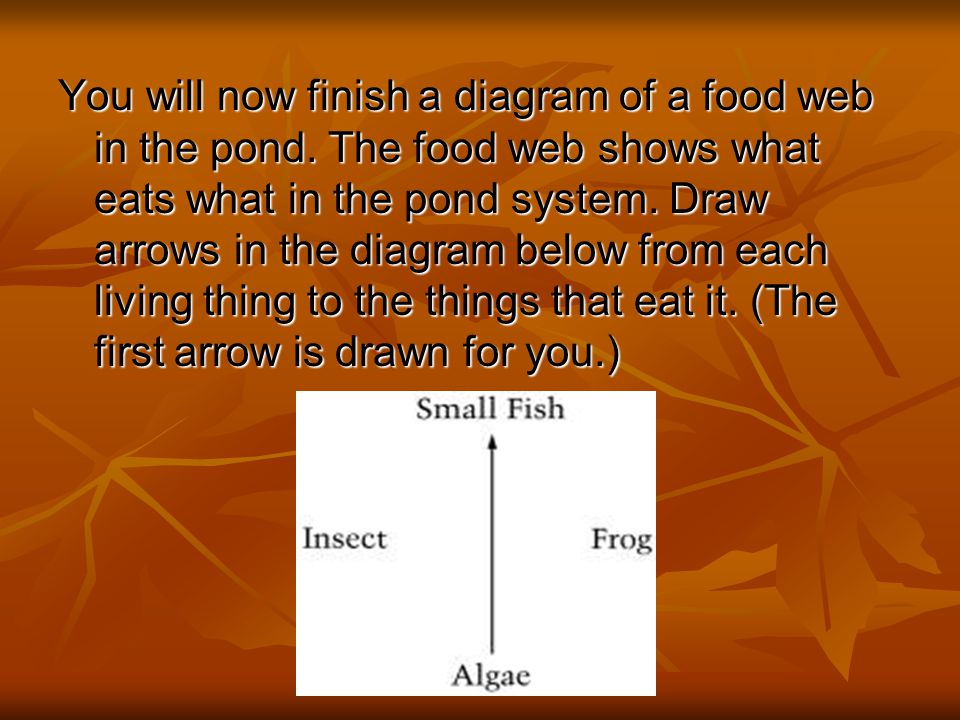 You will now finish a diagram of a food web in the pond.