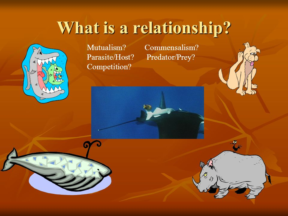What is a relationship Mutualism Commensalism Parasite/Host Predator/Prey Competition