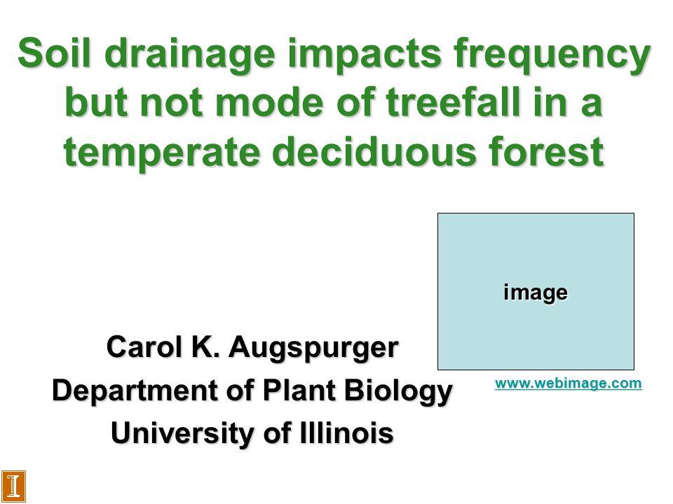 Background: Important role of treefalls in forest regeneration image www.webimage.com treefall