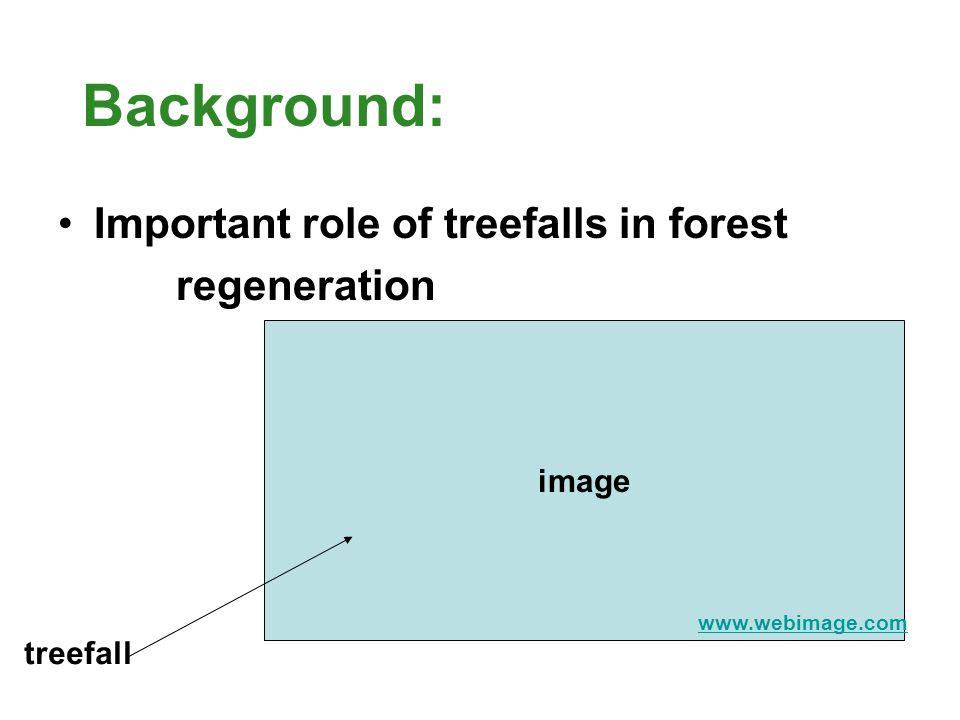 Background: Types of treefalls: uproot vs. snap off image www.webimage.com