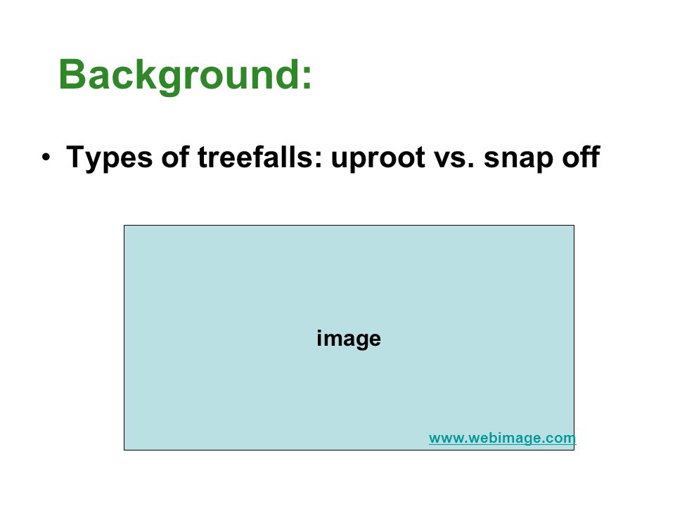Background: Types of treefalls: uproot vs. snap off image www.webimage.com