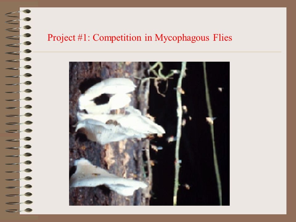 Project #1: Competition in Mycophagous Flies
