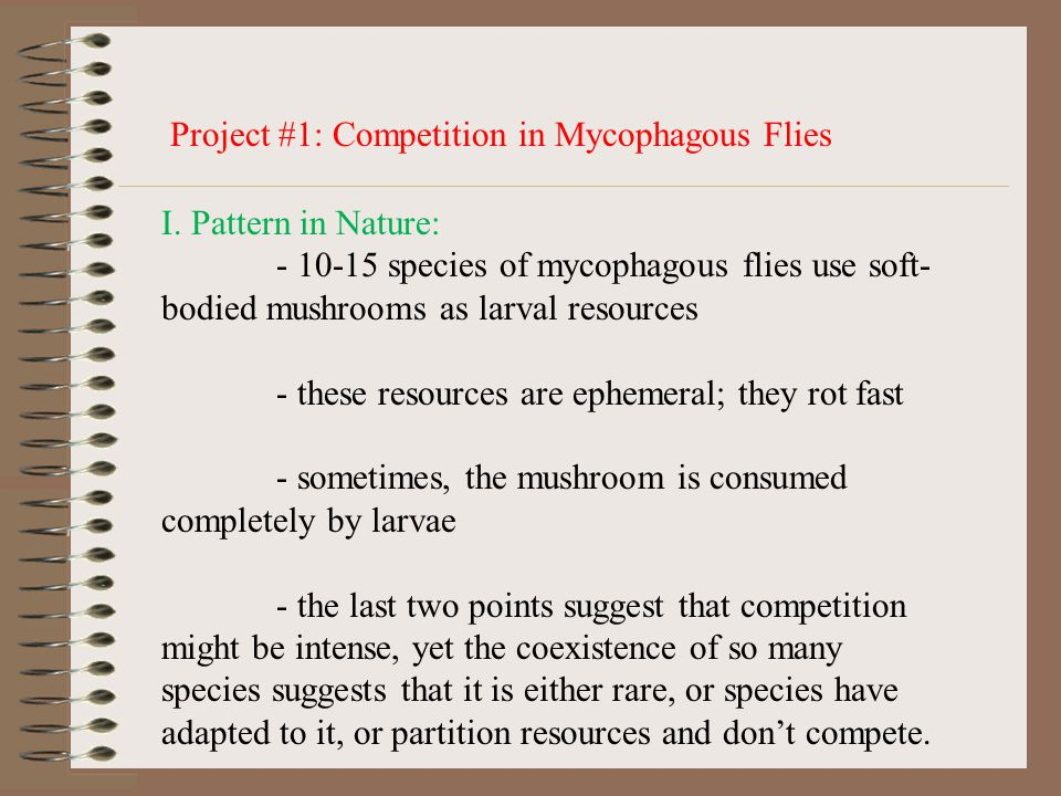 Project #1: Competition in Mycophagous Flies I.