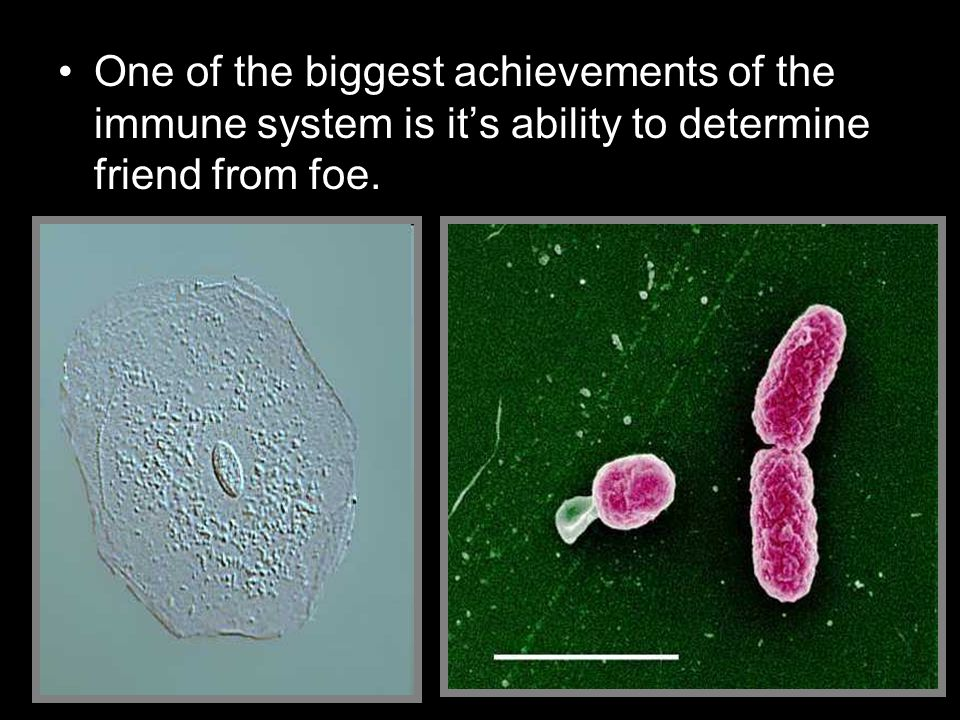 One of the biggest achievements of the immune system is it's ability to determine friend from foe.
