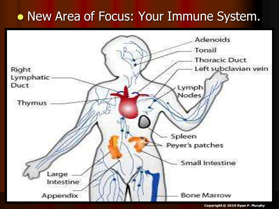 New Area of Focus: Your Immune System. New Area of Focus: Your Immune System.