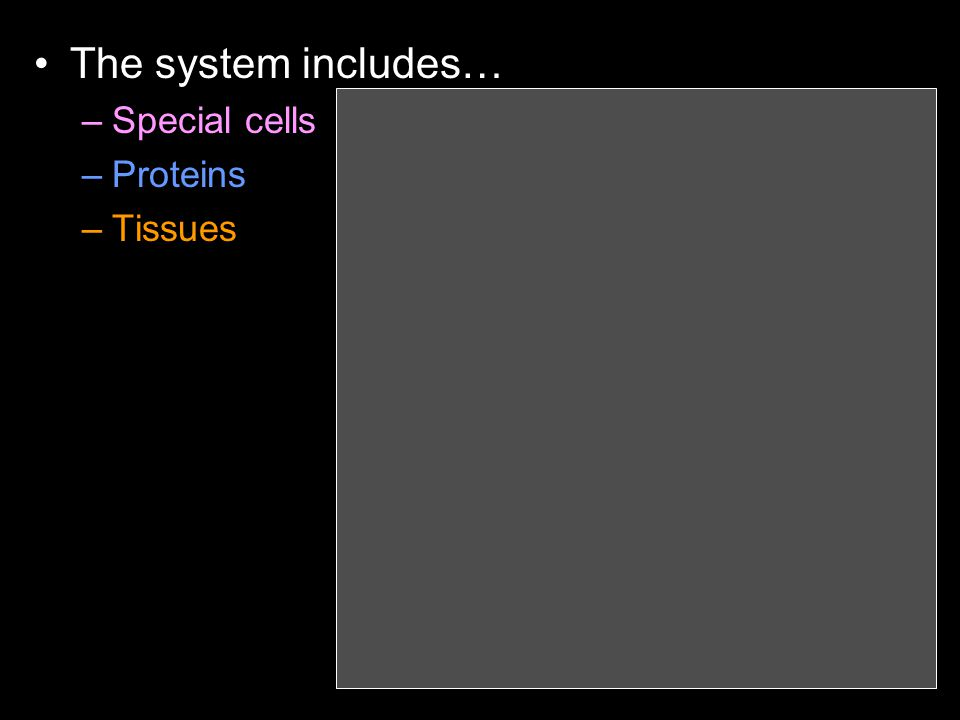 The system includes… –Special cells –Proteins –Tissues