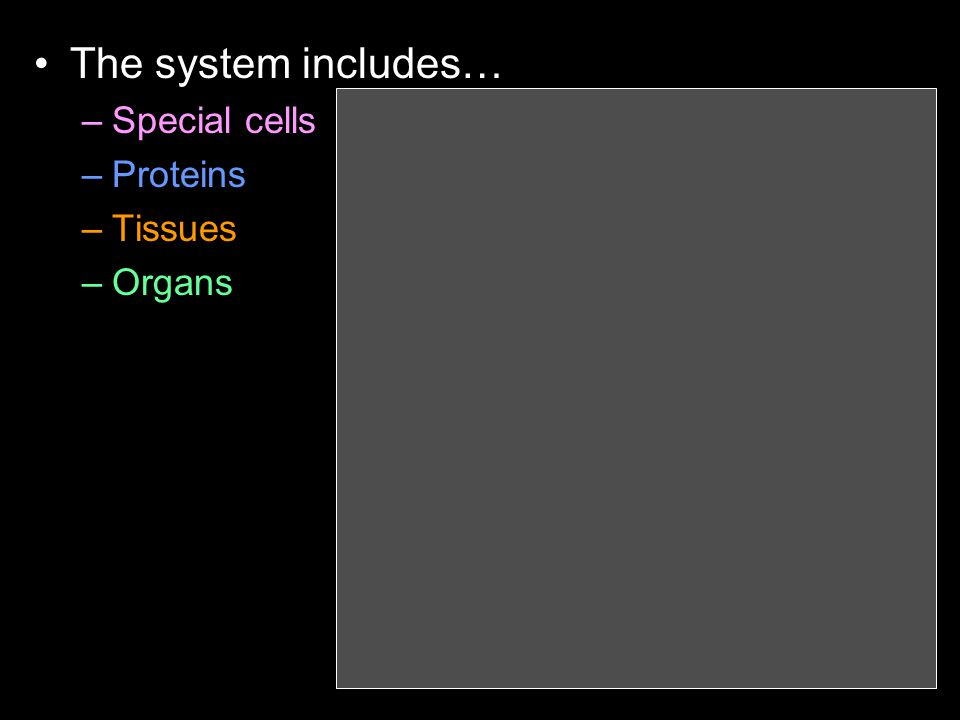The system includes… –Special cells –Proteins –Tissues –Organs