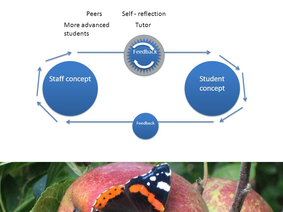 Staff conceptStudent concept Feedback Tutor Self - reflectionPeers More advanced students