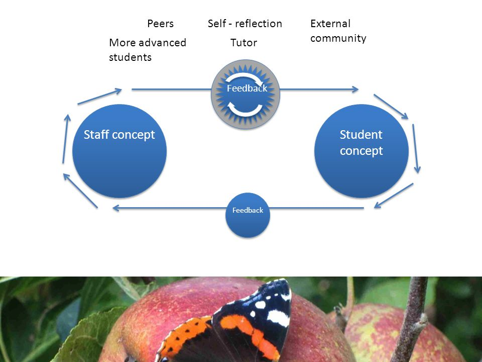 Staff conceptStudent concept Feedback Tutor Self - reflectionPeers More advanced students External community