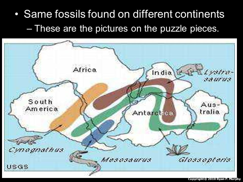 Same fossils found on different continents –These are the pictures on the puzzle pieces.
