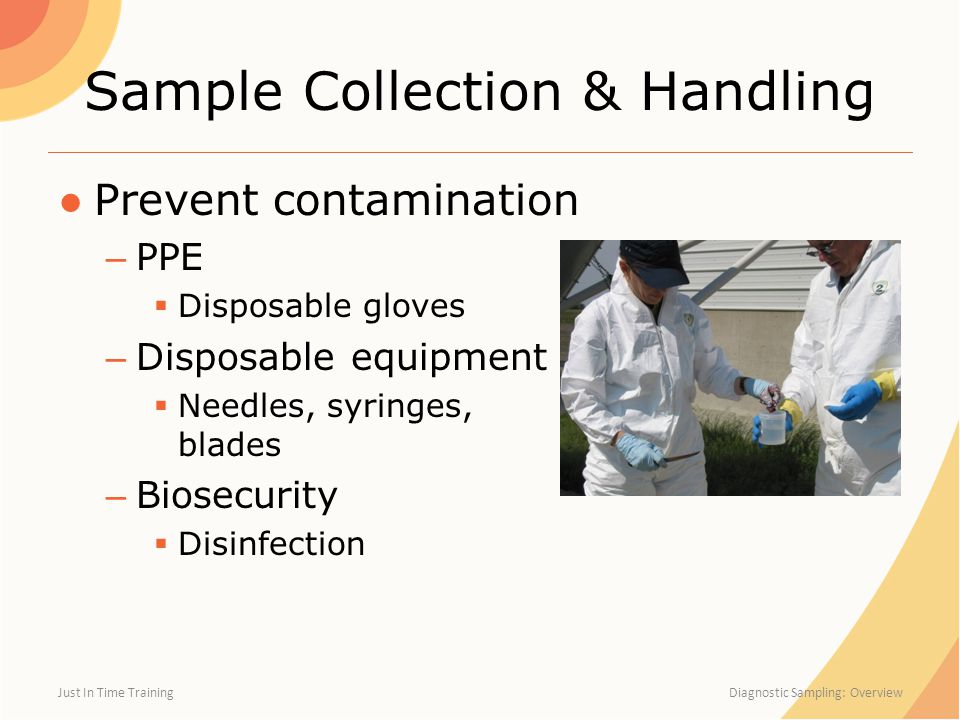 Sample Collection & Handling ●Prevent contamination – PPE  Disposable gloves – Disposable equipment  Needles, syringes, blades – Biosecurity  Disin