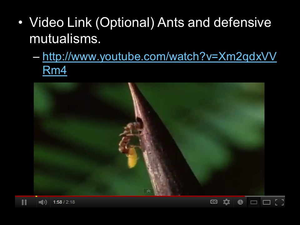 Video Link (Optional) Ants and defensive mutualisms. –http://www.youtube.com/watch?v=Xm2qdxVV Rm4http://www.youtube.com/watch?v=Xm2qdxVV Rm4