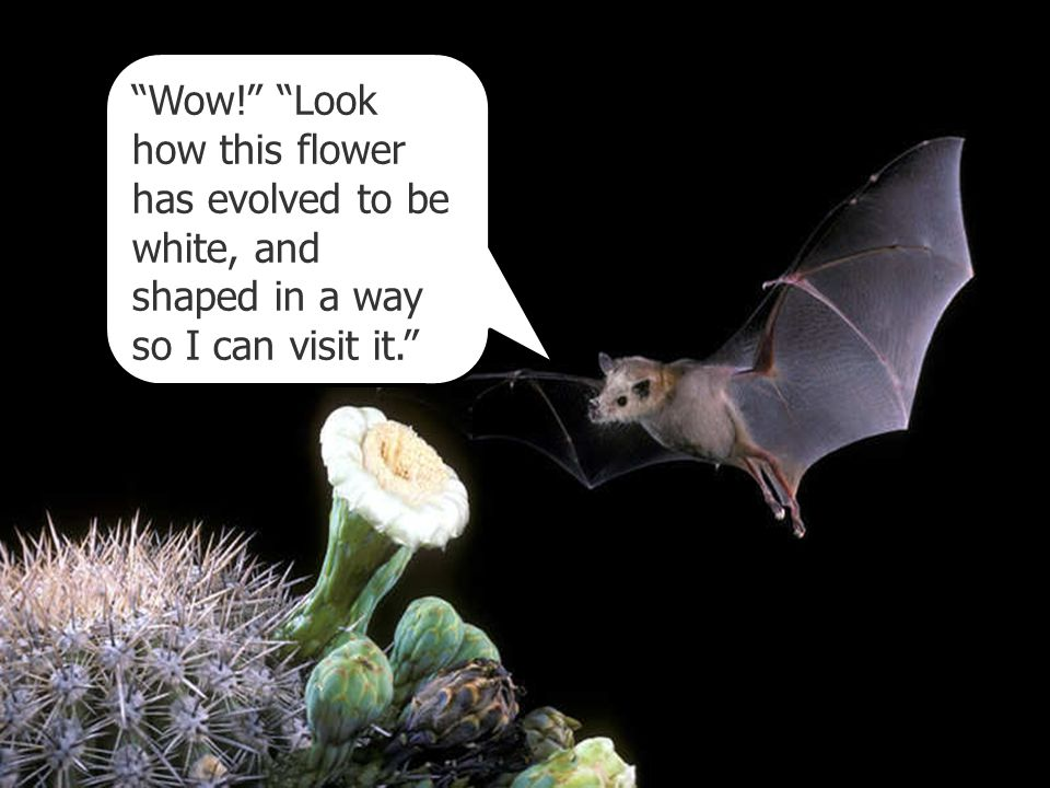 """""""Wow!"""" """"Look how this flower has evolved to be white, and shaped in a way so I can visit it."""""""