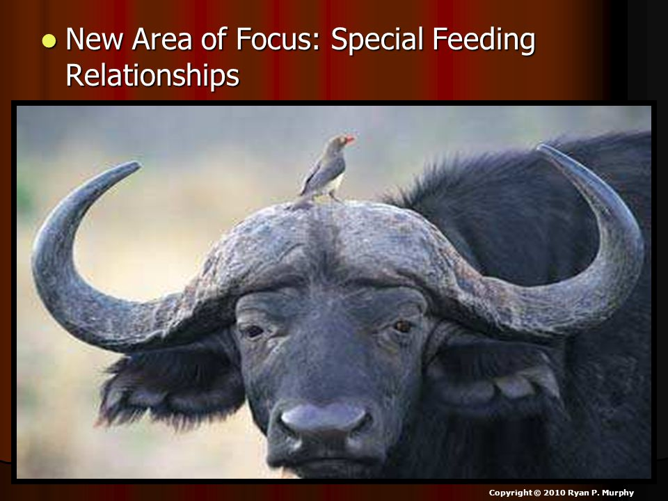New Area of Focus: Special Feeding Relationships New Area of Focus: Special Feeding Relationships Copyright © 2010 Ryan P. Murphy