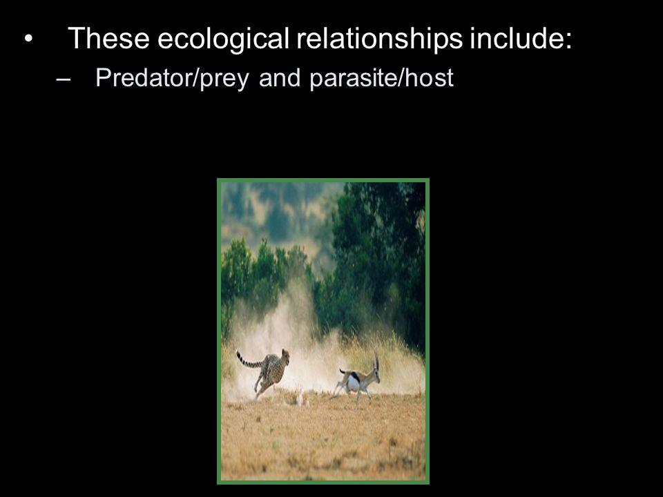 –Predator/prey and parasite/host
