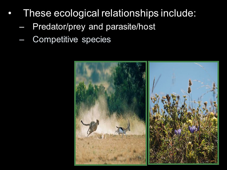 These ecological relationships include: –Predator/prey and parasite/host –Competitive species