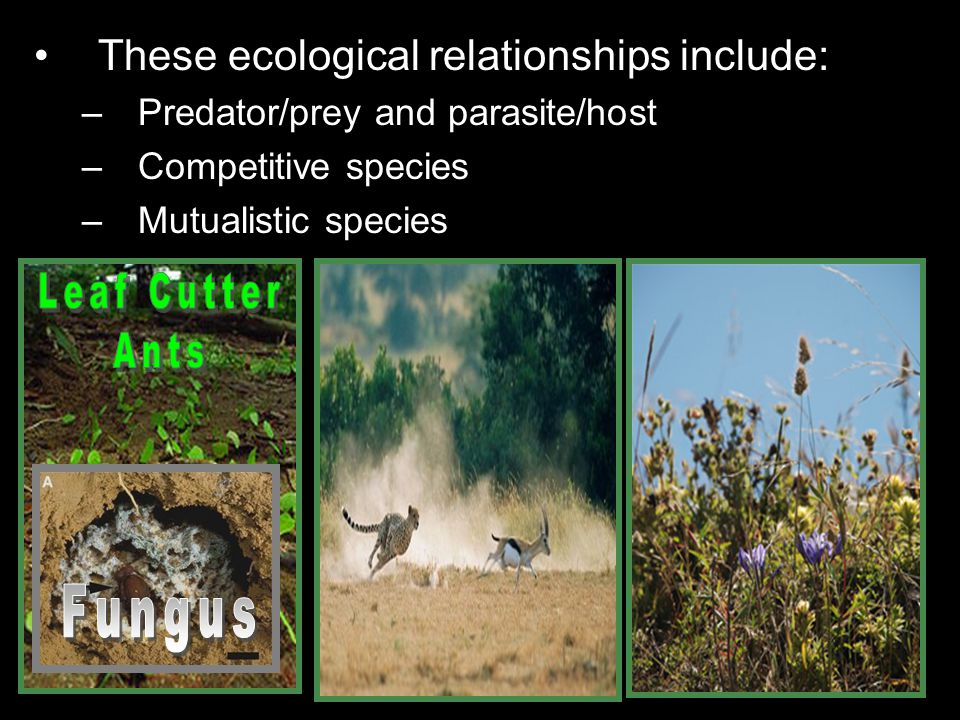 These ecological relationships include: –Predator/prey and parasite/host –Competitive species –Mutualistic species