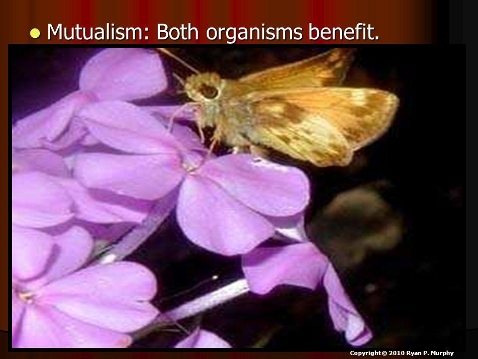 Mutualism: Both organisms benefit. Mutualism: Both organisms benefit. Copyright © 2010 Ryan P. Murphy
