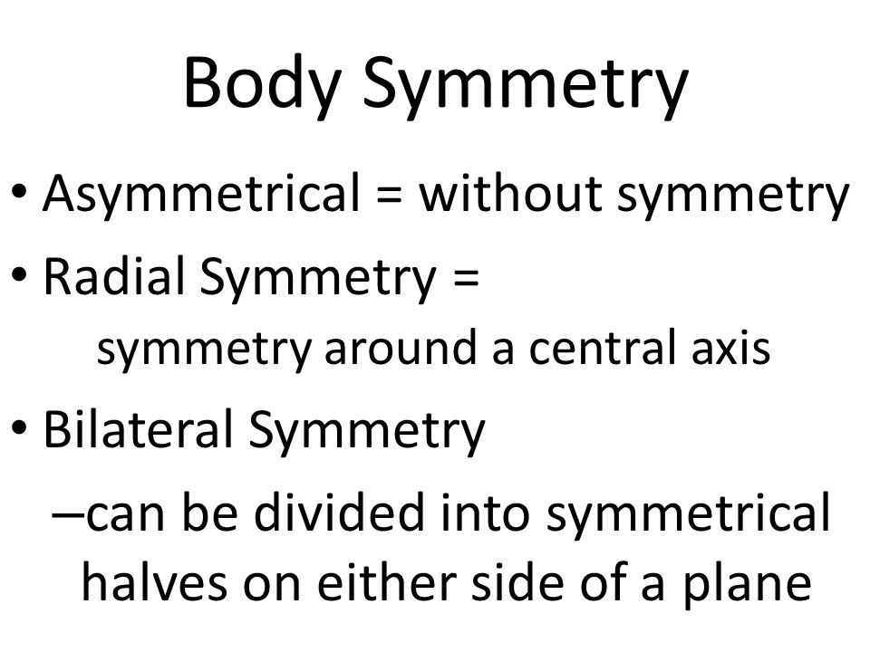 Body Symmetry Asymmetrical = without symmetry Radial Symmetry = symmetry around a central axis Bilateral Symmetry – can be divided into symmetrical halves on either side of a plane