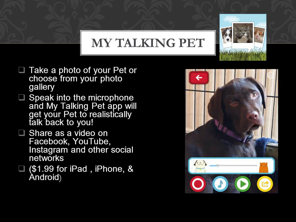  Take a photo of your Pet or choose from your photo gallery  Speak into the microphone and My Talking Pet app will get your Pet to realistically talk back to you.