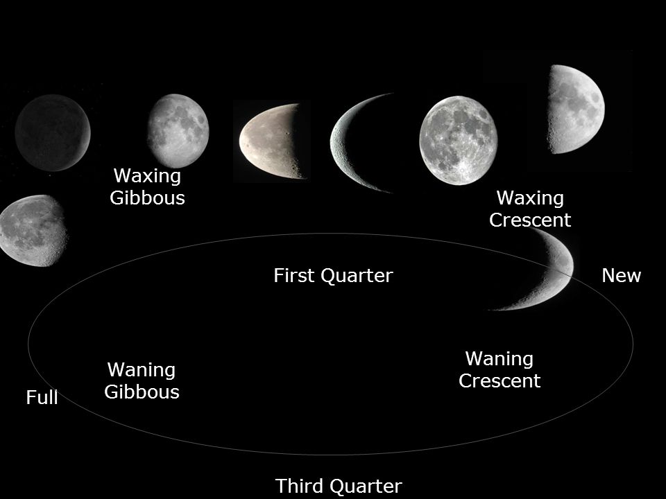 New Full First Quarter Third Quarter Waxing Crescent Waxing Gibbous Waning Gibbous Waning Crescent