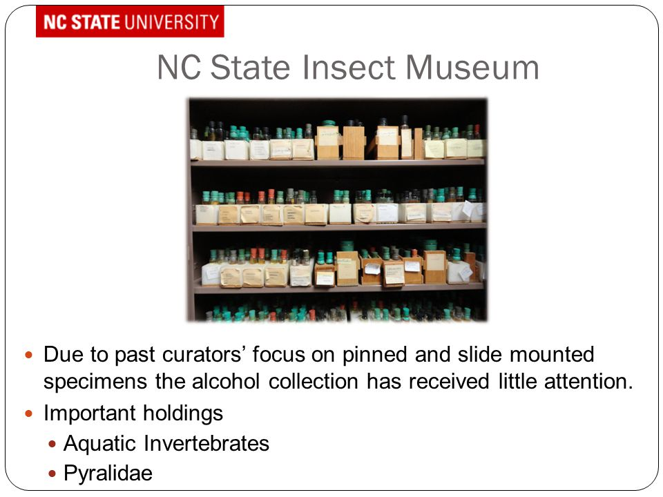 NC State Insect Museum Due to past curators' focus on pinned and slide mounted specimens the alcohol collection has received little attention. Importa