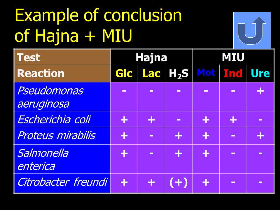 Example of conclusion of Hajna + MIU TestHajnaMIU ReactionGlcLacH2SH2S Mot IndUre Pseudomonas aeruginosa -----+ Escherichia coli++-++- Proteus mirabilis+-++-+ Salmonella enterica +-++-- Citrobacter freundi++(+)+--