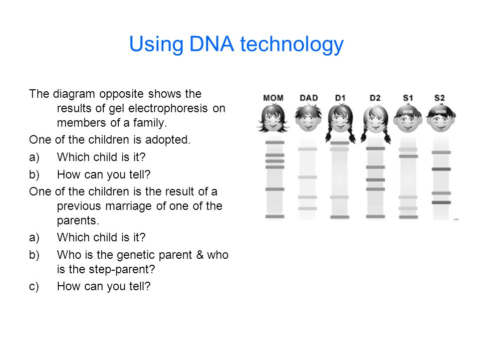 Using DNA technology The diagram opposite shows the results of gel electrophoresis on members of a family.