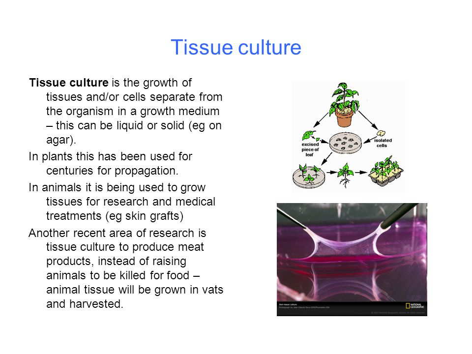 Tissue culture Tissue culture is the growth of tissues and/or cells separate from the organism in a growth medium – this can be liquid or solid (eg on agar).