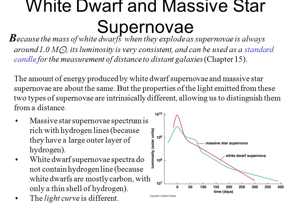 White Dwarf and Massive Star Supernovae B ecause the mass of white dwarfs when they explode as supernovae is always around 1.0 M ⊙, its luminosity is very consistent, and can be used as a standard candle for the measurement of distance to distant galaxies (Chapter 15).
