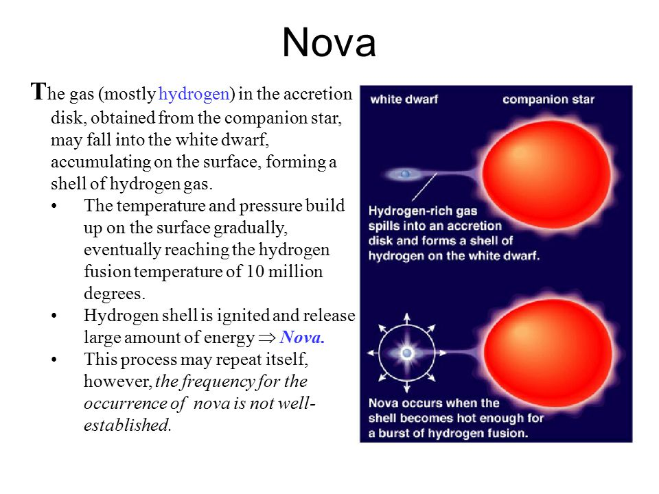 Nova T he gas (mostly hydrogen) in the accretion disk, obtained from the companion star, may fall into the white dwarf, accumulating on the surface, forming a shell of hydrogen gas.