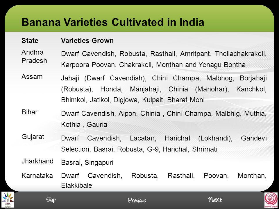 Pachanadan: It is popular variety in Tamilnadu in marginal soils, well suited for intercrop in Coconut or Areca nut garden.