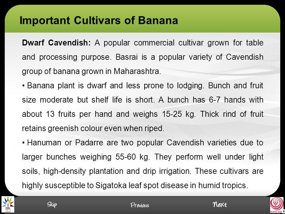 Important Cultivars of Banana Dwarf Cavendish