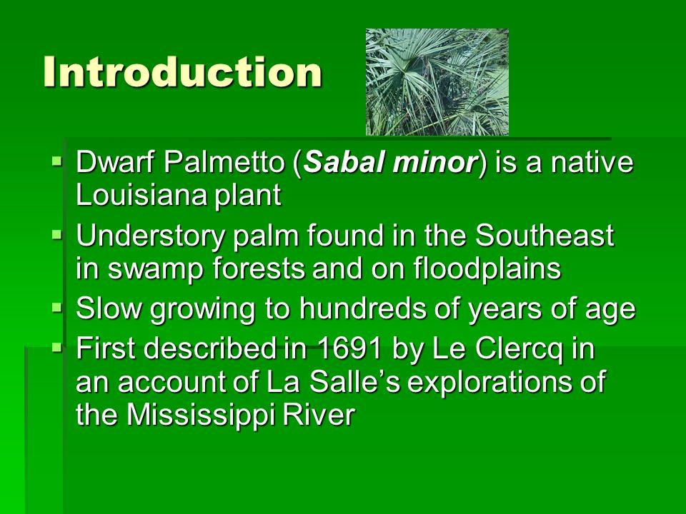 Dwarf Palmetto  Botanical Classification  Family: Palmae  Genus: Sabal  Specific epithet: minor