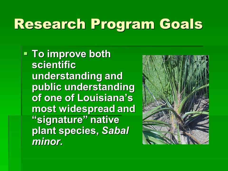 Research Target: Phase I  To find the simplest way of estimating the age of individual Sabal minor plants—by investigating the predictive value of selected foliar variables that are supported by a review of relevant research literature in plant ecology and in horticulture.