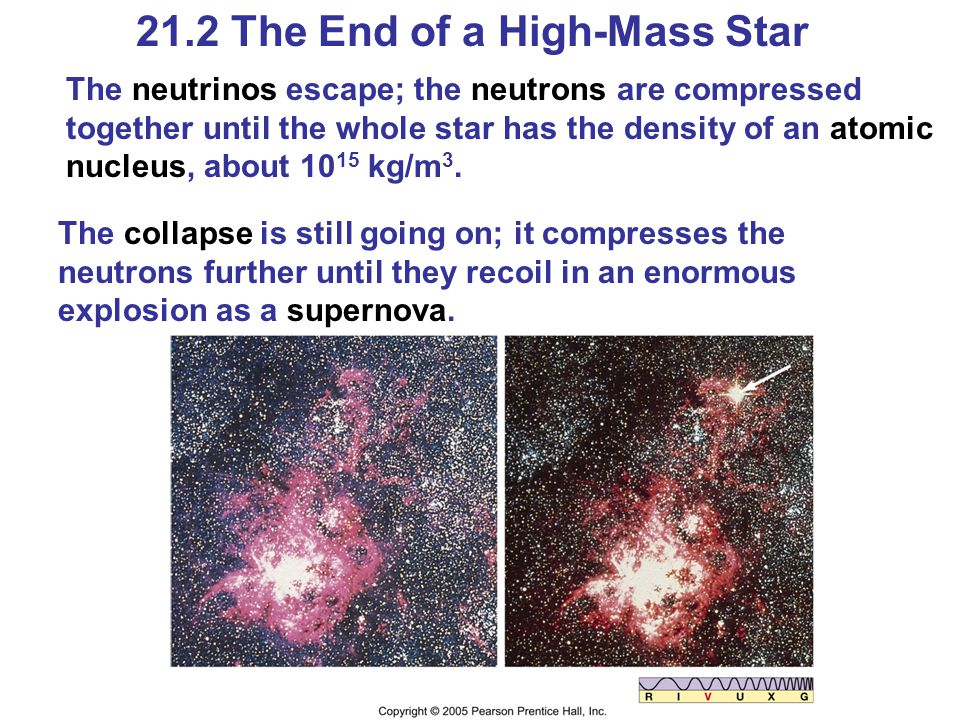 21.2 The End of a High-Mass Star The neutrinos escape; the neutrons are compressed together until the whole star has the density of an atomic nucleus, about 10 15 kg/m 3.