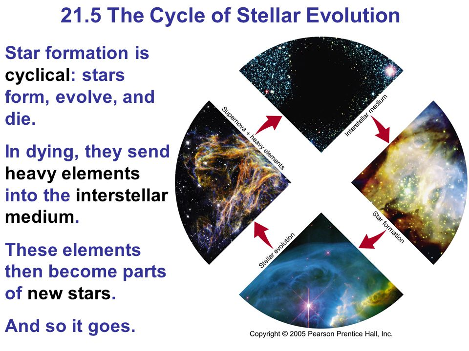 21.5 The Cycle of Stellar Evolution Star formation is cyclical: stars form, evolve, and die.