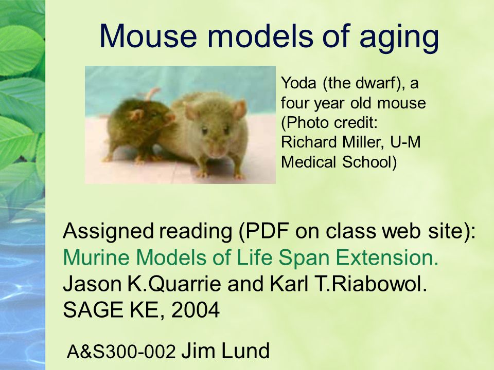 Mouse models of aging A&S300-002 Jim Lund Assigned reading (PDF on class web site): Murine Models of Life Span Extension. Jason K.Quarrie and Karl T.R