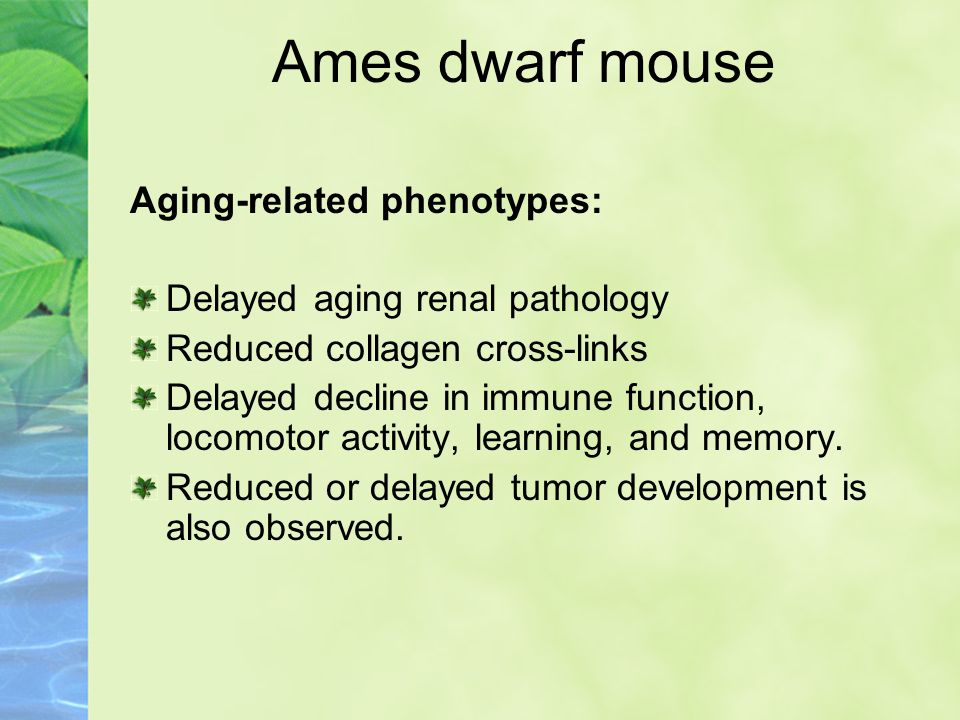Additive: CR extends lifespan of long-lived Ames mice.