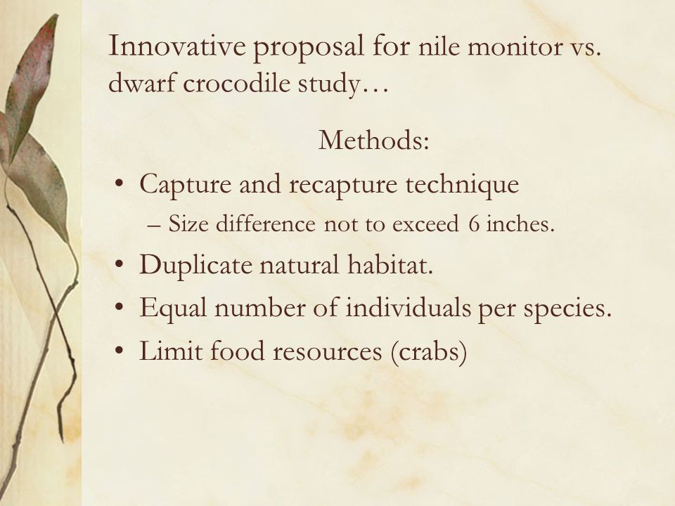 Innovative proposal for nile monitor vs. dwarf crocodile study… Methods: Capture and recapture technique –Size difference not to exceed 6 inches. Dupl