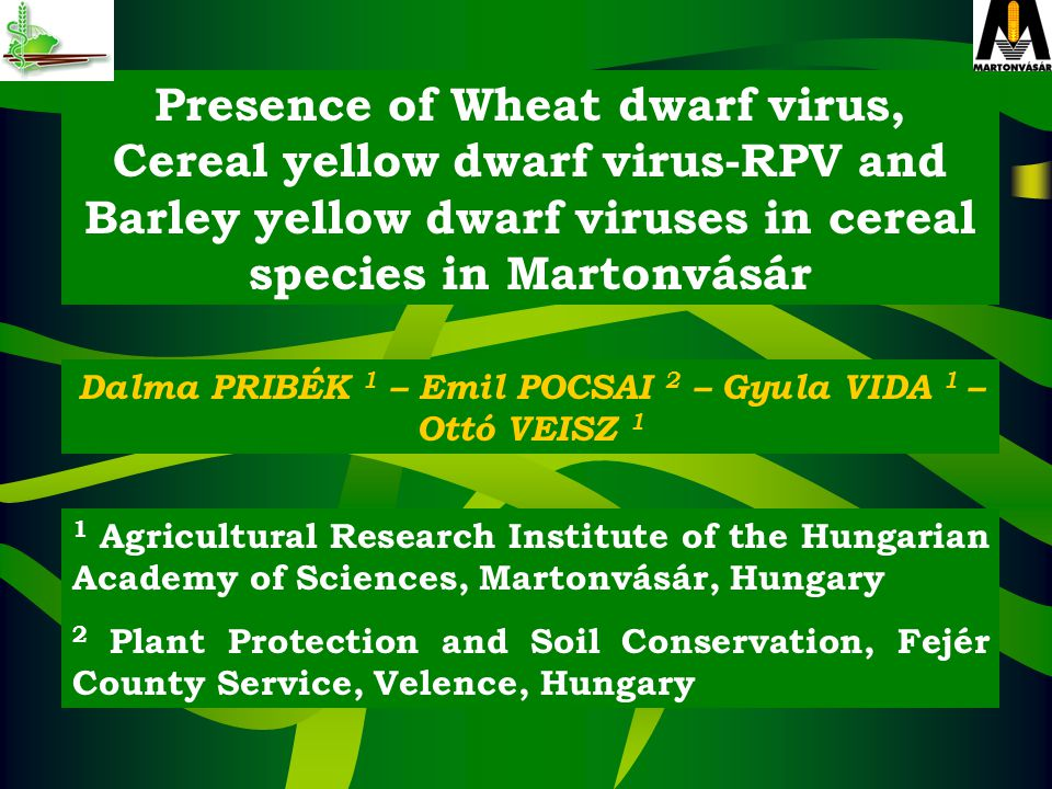 Presence of Wheat dwarf virus, Cereal yellow dwarf virus-RPV and Barley yellow dwarf viruses in cereal species in Martonvásár Dalma PRIBÉK 1 – Emil POCSAI 2 – Gyula VIDA 1 – Ottó VEISZ 1 1 Agricultural Research Institute of the Hungarian Academy of Sciences, Martonvásár, Hungary 2 Plant Protection and Soil Conservation, Fejér County Service, Velence, Hungary