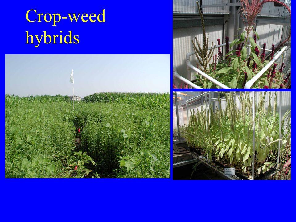 Crop-weed hybrids