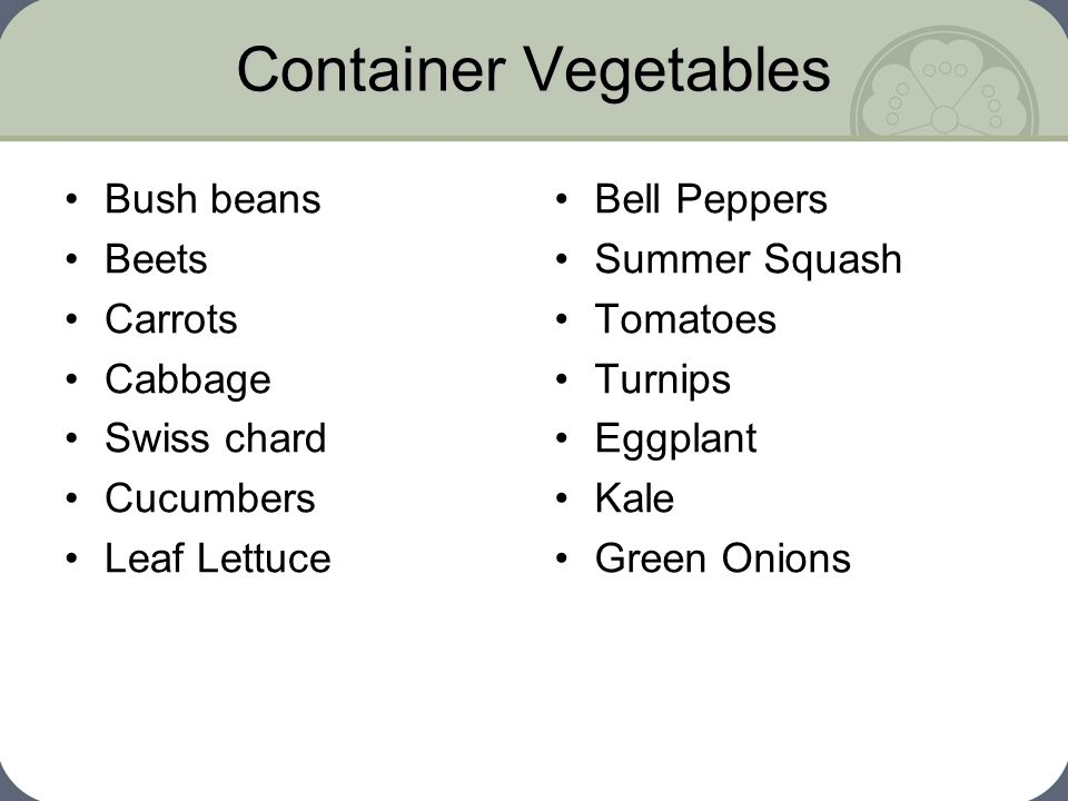 Container Vegetables Bush beans Beets Carrots Cabbage Swiss chard Cucumbers Leaf Lettuce Bell Peppers Summer Squash Tomatoes Turnips Eggplant Kale Gre