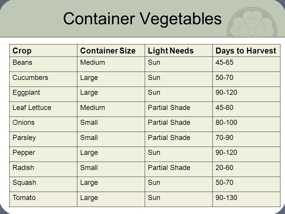Container Vegetables CropContainer SizeLight NeedsDays to Harvest BeansMediumSun45-65 CucumbersLargeSun50-70 EggplantLargeSun90-120 Leaf LettuceMedium